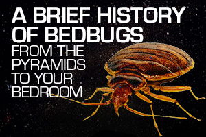 Bed Bugs Throughout History Rhb Magazine