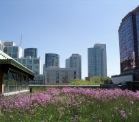 Washington, DC and Toronto top list of cities with the most green roof construction for 2014