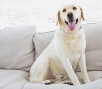 Pampered Pooches: Creating Pet-Friendly Multifamily Communities