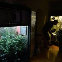 CFAA urges Senate to ban home growing