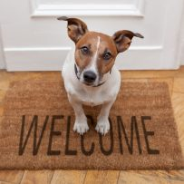 SIX STEPS TO PROTECT YOUR MULTIFAMILY ASSETS FROM PET LIABILITY