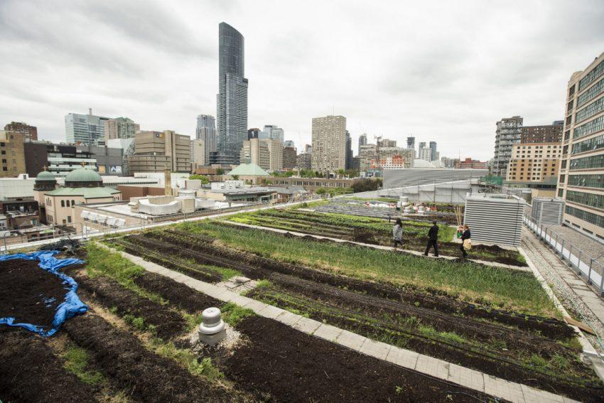 green-roof.jpg.size.custom.crop.850x567