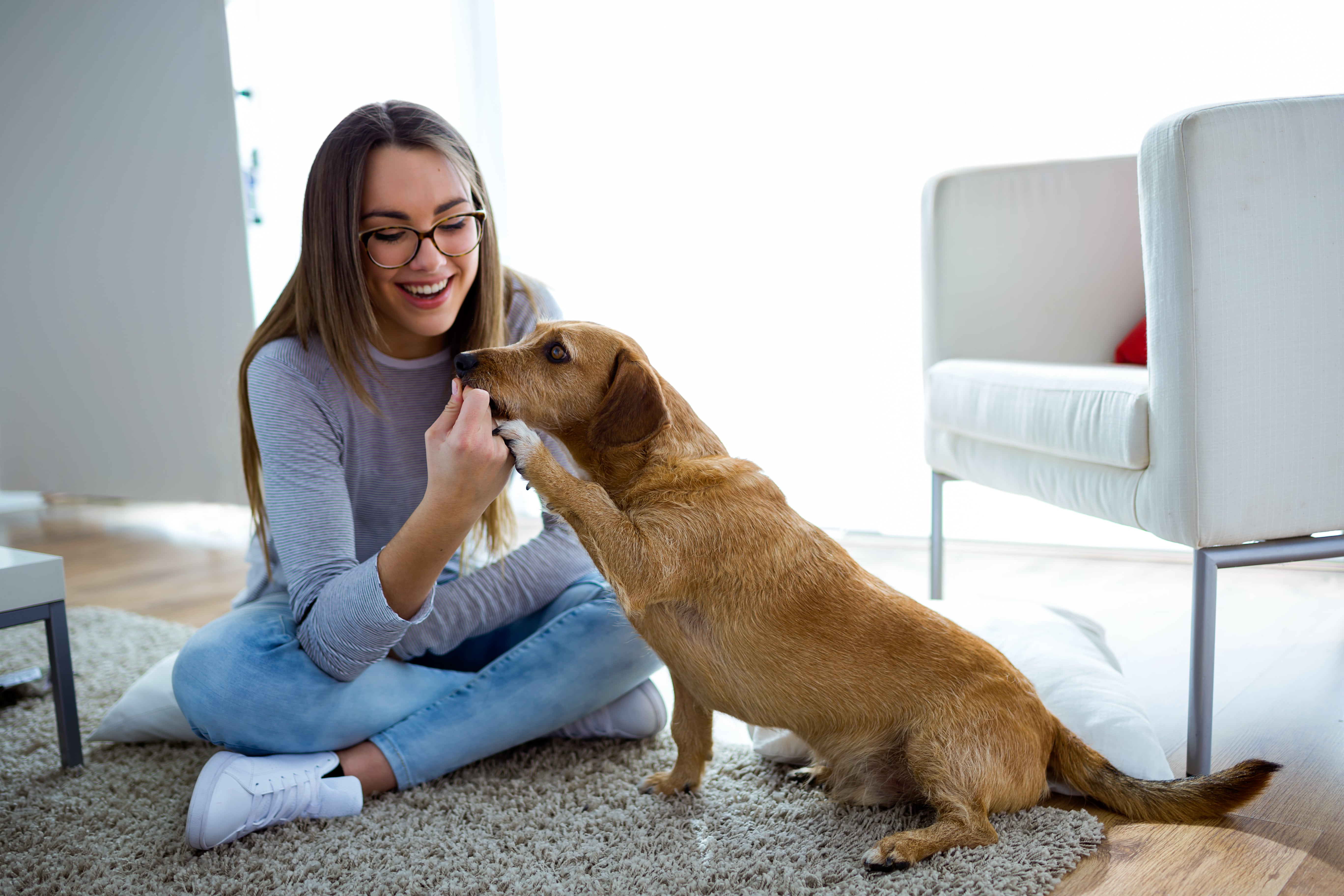 pet-friendly-multifamily-communities-3