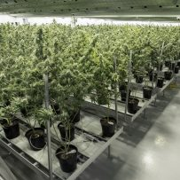 Rolling Out Legal Weed Comes With a High Price Tag for Canada