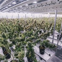 Canada's Pot Industry Is Hungry for Real Estate