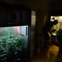 CFAA urges Senate to ban home growing